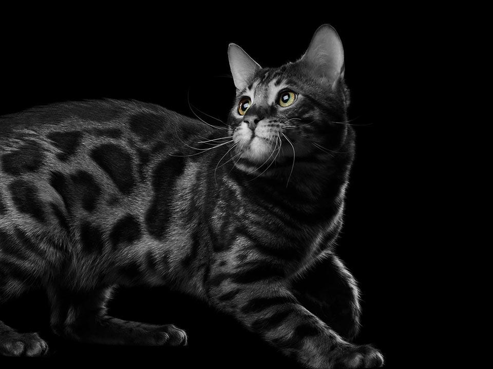 encurio Katze - WENDIG UND FLEXIBEL
