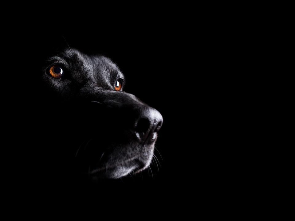 encurio Hund - TREU, LOYAL UND ZUVERLÄSSIG